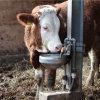 Suevia drinkbak, rvs, type 1200, incl messing ventiel, geschikt voor rundvee